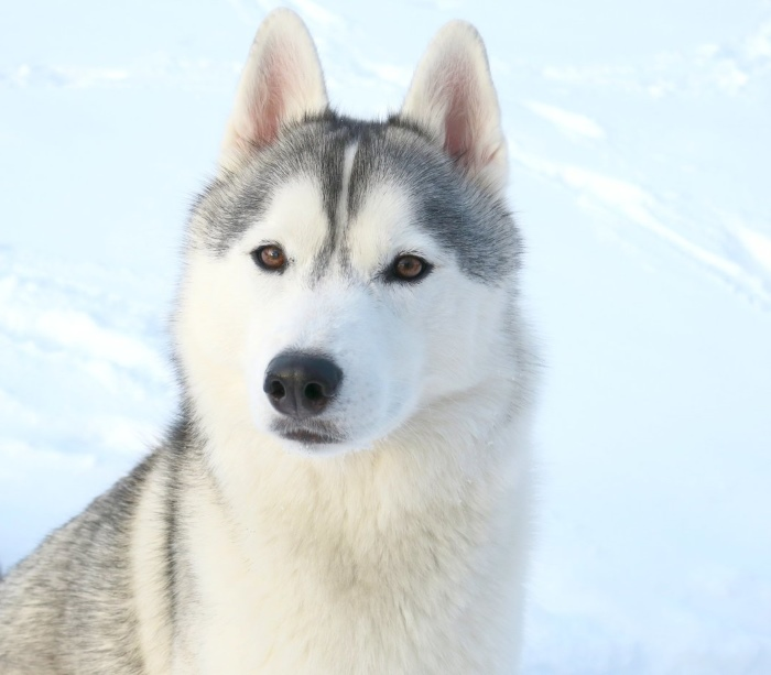 Snow Dog Vlogs